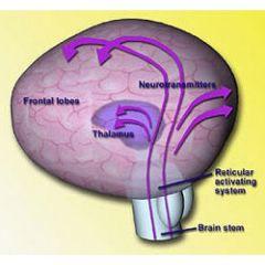 Neuro100: BCIA Neurofeedback Certification Web Review